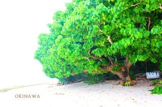 OINAWA.jpg